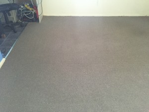 Carpets in living/dining area cleaned