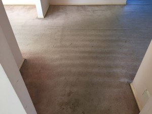 Entrance to shelving and dining rooms with heavy stains